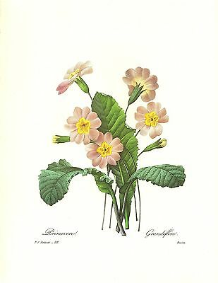 1991 Vintage REDOUTE FLOWER #82 DOUBLE NARCISSUS Color Art Print Lithograph