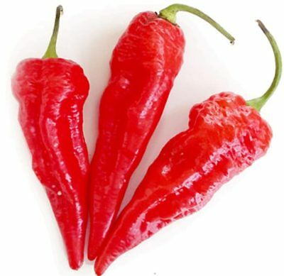 Ghost Pepper seeds You Choose Packet size Painfully Hot Bhut Jolokia Chili  #67
