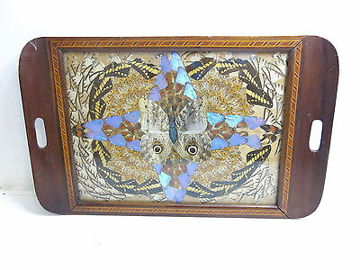 Vintage Mid Century Butterfly Wing Art Serving Tray With Nice Wooden Inlay Work