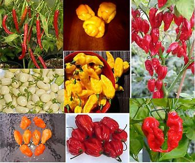 #4 SUPER HOT Pepper Seed Collection-Moruga Scorpion Yellow,Fatalii & 8 more!