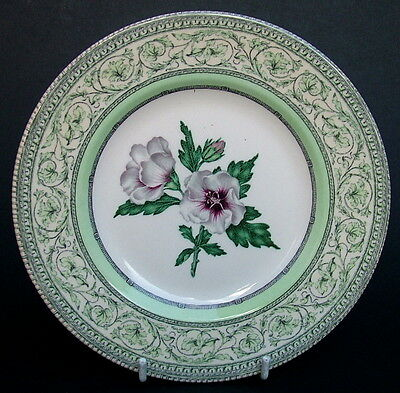 Queens Churchill For RHS Caroline Applebee Collection Side Bread Plates 18cm VGC