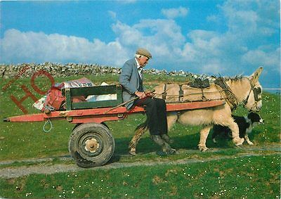 Postcard:-Ireland, Donkey And Cart, 'Going Home'