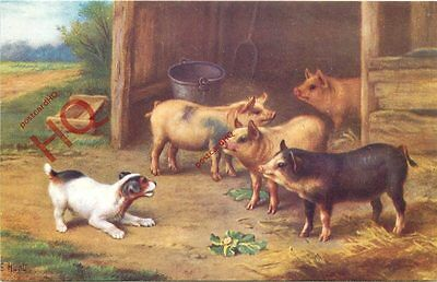 Postcard::Pigs And Small Dog, By E. Hunt [Salmon]