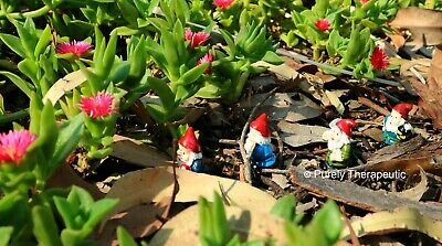 SET OF 4 MINIATURE FAIRY GARDEN GNOMES~Mythical Dwarf Statue Figurines Garden