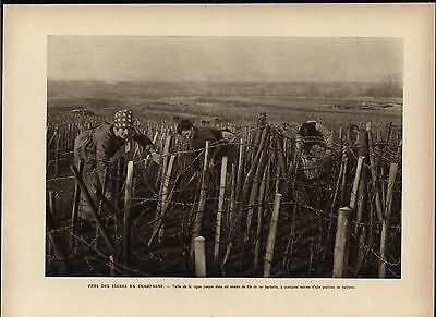 Woman Mending Barbed Wire Line Champagne World War I 1918 vintage historic print