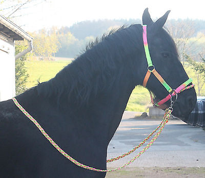 NEON Reithalfter WANDERREITHALFTER + ZÜGEL Bitless Bridle Sidepull Cob Full Pony