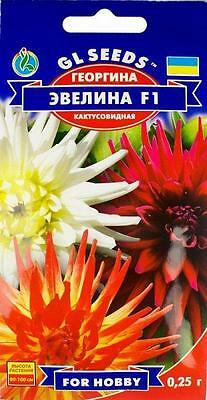 Dahlia Variabilis Flower Seeds Evelina F1 annuals from Ukraine