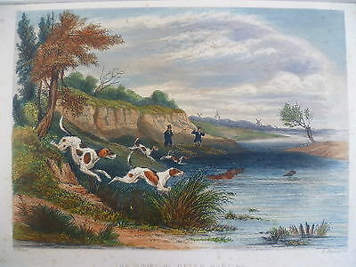 Hand Coloured engraving Otter Hunting