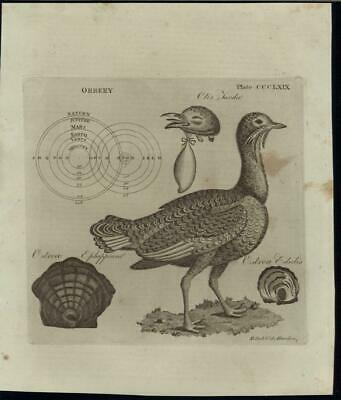 European Flat Oyster Orrary Solar System Model 1798 antique engraved print