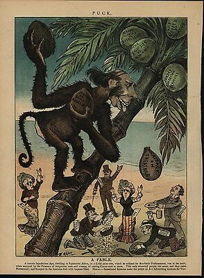 Monkey Throwing Coconut Seedy Receivers 1882 antique color lithograph print