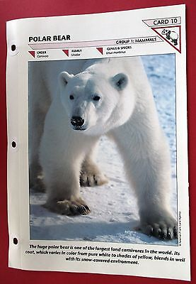 The Polar Bear 1995 Vintage Information Card 4 Pages Of Photos Bear & Cub Facts