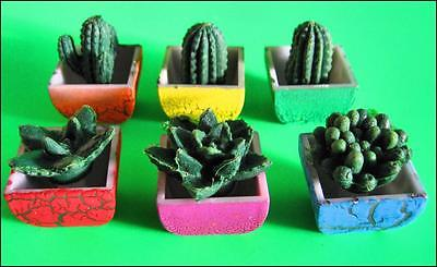 Bulk Lot x 5 Mini Growing Cactus Plants in Pots Party Favors Novelty Toy NEW