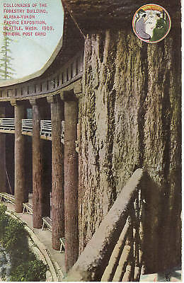 Collonade-Forestry Building-Alaska Yukon Pacific Expo-AYPE-Seattle-1909 Postcard