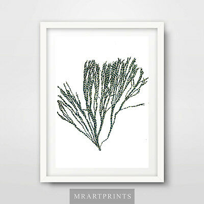 SEASIDE SEAWEED Art Print Poster Home Decor Room Drawing Beach Themed Pictures