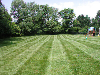 Premium Family & Dog Hard-Wearing Tough Lawn Grass Seed Certified Seeds