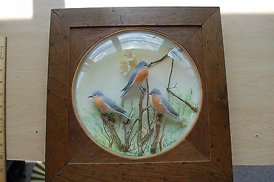 Hand Carved 3 Eastern Bluebirds?? Under Glass By Arthur Peltier