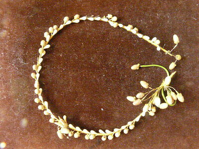 Antique French Waxed Blossom Tiara Wedding Crown Couronne Amour