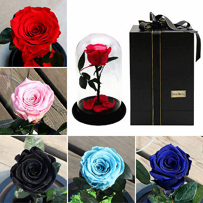 The Little Prince Preserved Flower Forever Natural Fresh Rose In Glass Cover