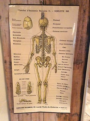 Vintage French Anatomical Chart
