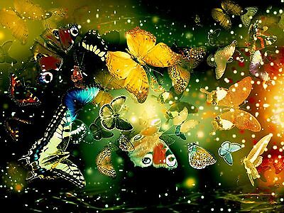 Butterflies Beautiful High Quality wall College Art poster Choose your Size