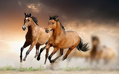 Wild Horse wallpaper Elegant High Quality wall  Art poster Choose your Size
