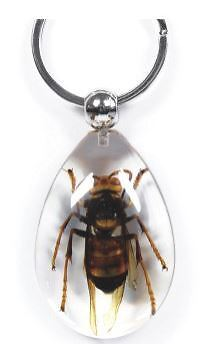 Real Giant Asian Hornet Clear Key Ring Insect Specimen Good Luck keyring