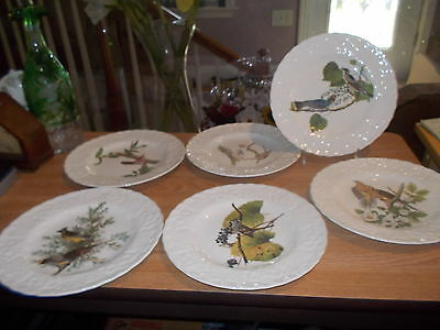 Vintage Lot of 6 Alfred Meakin Audubon BIRDS OF AMERICA Salad/Luncheon Plates