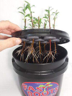 7 Site Indoor Plant Cloning Machine - Root Growing Air Bubbler Hydroponics Kit