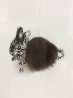 Baby Rabbit Picture By Jen Franklin Mixed Media