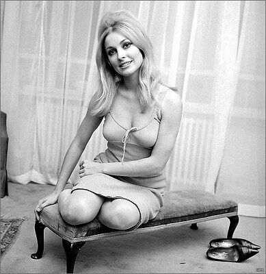 Sharon Tate Actress Legendary 8x10 Picture Celebrity Print