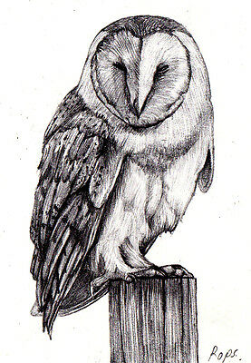 """Aceo Original Drawings Pencil On Paper """" Owl """" By Artist Rops Studio"""