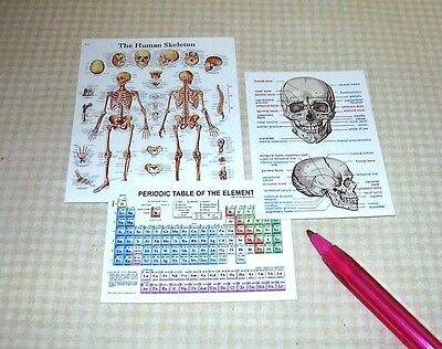 Miniature Large Medical or Laboratory Posters, Set of 3: DOLLHOUSE 1/12