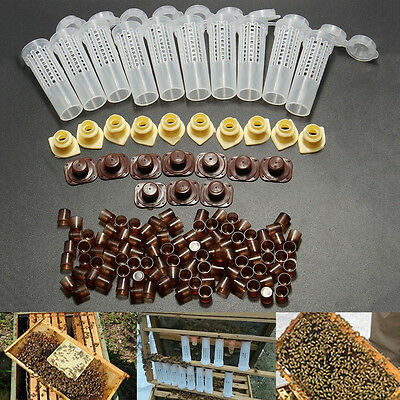 Apicoltura Protezione Ape Regina Strumento Beekeeping Rearing Cages + 100x Cups