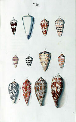 Seashells Poster Nature Marine Reef Sea Shell Antique Repro Print #8