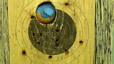 Don Briddell '' Knothole'' Overboard Art Eastern Bluebird