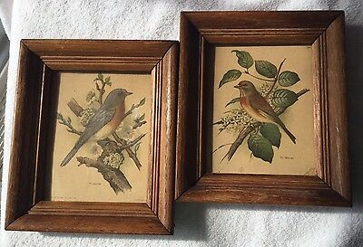 Vintage Ph Gomer Bird Prints In Frames-Set Of Two