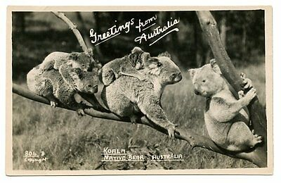vintage real photo postcard Koalas Native Bear Australia