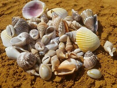 100g MIXED SEASHELLS FROM BALI (HOME DECOR / ART & CRAFT / AQUARIUM)