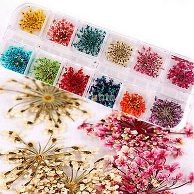 Mixed Colors Real Dry Dried Flower for UV Gel Acrylic Nail art Tips Decoration