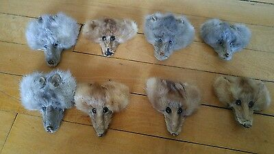 Vtg lot of 8 mink heads Taxidermy supplies stuffed animal heads
