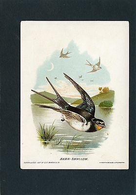Trade Card of a Barn Swallow-by Good Will Soap Sold by Marsh & Co. Lynn, MA
