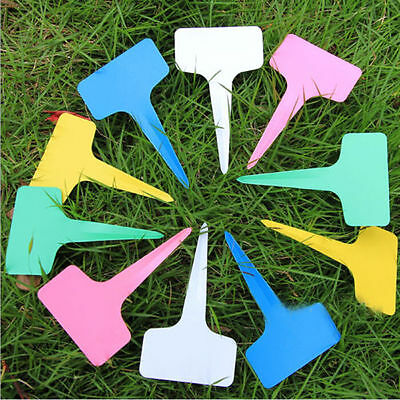 100x Plastic Plant T-type Tags Markers Nursery Garden Soil POT Labels DIY 6x10cm