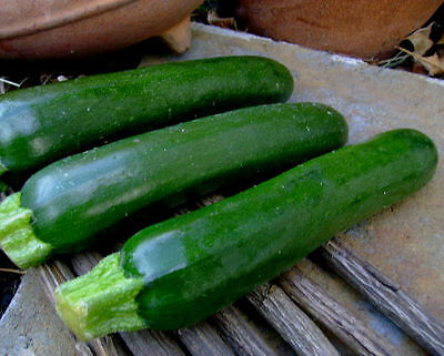 220 Black Beauty Zucchini (Summer squash) Seeds Non-GMO Easy to grow 1 Ounce