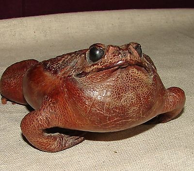 Vintage TAXIDERMY FROG / Cane Toad, Tanned Leather, Souvenir