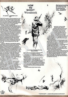 How to SHOOT WOODCOCK Demonstrated - David Olive Illustrator Will Garfit Article