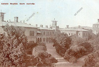 vintage postcard real photo Adelaide Hospital South Australia CAT CHARITY