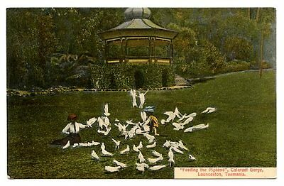 vintage postcard feeding pigeons Cataract Gorge Tasmania Australia CAT CHARITY