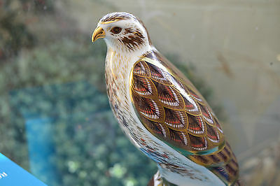 """Royal Crown Derby Paperweights  """"BUZZARD"""" L Edition 750   1st Quality & Orig Box"""