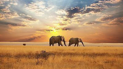 Stunning Elepheants Sunset Wild animal hight quality poster Choose your Size