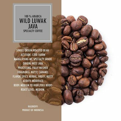 100% Authentic JAVA ARABICA Civet Coffee Wild Kopi Luwak Traditional Indonesia